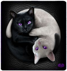 Manta Polar Yin Yang Cats