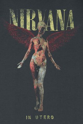 Amplified Collection - In Utero